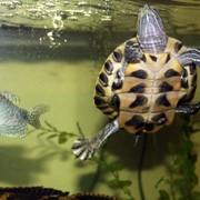 Корма для рыбок и черепах фото
