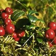 Экспертиза дикорастущих плодов, ягод и травянистых растений фото
