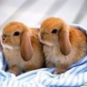 Премикс для кроликов фото