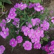 Рассада цветов фото