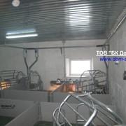 Строительство и реконструкция свинокомплексов фото