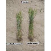 Регуляторы роста растений Грейнактив-С фото