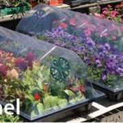 Теплицы садовые в Молдове фото