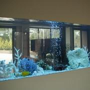 Коралловый риф в аквариуме фото
