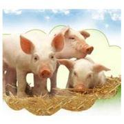 Премиксы для сельскохозяйственных животных цена в Украине, Киев. фото