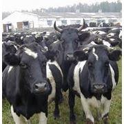 Кормовая добавка сорбент токсинов ингибитор плесени корма Эмерсион Индия фото