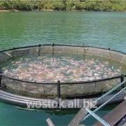 Сетка Tenax для аквакультуры рыбоводства, сетки для садкового хозяйства фото