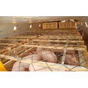 Свиньи,свиньи сальных пород,свиньи мясных пород,свиньи племенные продажа, оп фото