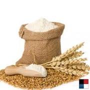 Переработка зерна на муку, Недригайлов фото