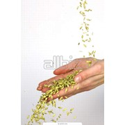 Переработка зерновых фото