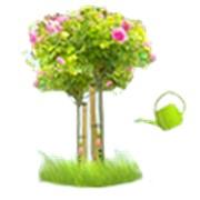 Садовник от агентства Уют-сервис фото