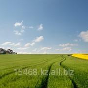Земельный участок сельхозназначения 10 до 100 га фото
