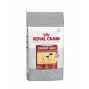 Cyno Energy 4800 Royal Canin корм для взрослых собак, Пакет, 20,0кг фото