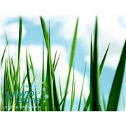 Травяная свежесть отдушка 25мл фото