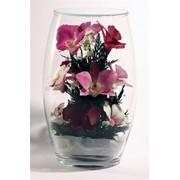 Нежные орхидеи, Цветы в стекле фото