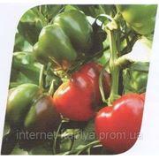 Семена сладкого перца ПРИТАВИТ 500 сем. Семинис. фото