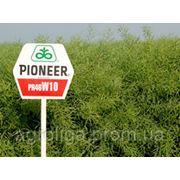 Насіння озимого ріпаку Pioneer ПР46В10 / PR46W10 фото