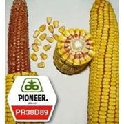 Семена кукурузы Анаста PR38D89 ФАО 330 фото