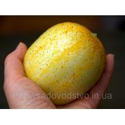 Огурец лимонный фото
