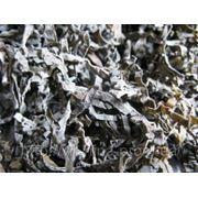 Сублимированная морская капуста 1:16 фото