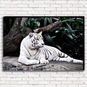 Фотокартина Белый тигр; 1 модуль; 50Х70; Холст фото