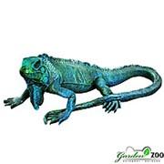 Фигура Игуана большая фото