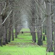 Услуги лесного хозяйства фото