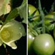 Инсектицид Варрант фото