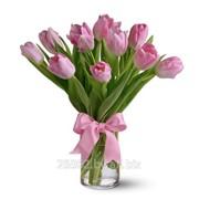 Живые тюльпаны фото