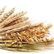 Наномикс зерновые (листовая подкормка) фото