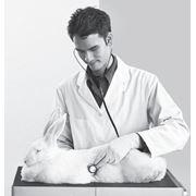 Все виды ветеринарных хирургических операций фото