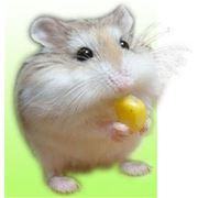 Удаление опухолей у животных фото