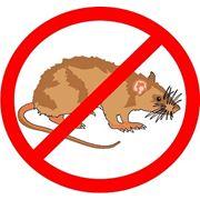 Дератизация. Уничтожение вредных грызунов.Уничтожение крыс. Уничтожение мышей. Одесса Одесская область фото