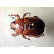 Очистка от инфекций насекомых и грызунов фото