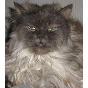 Кастрация котов заказать цена в Одессе фото