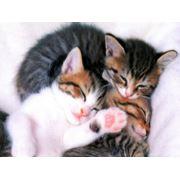 Кастрация кота стерилизация кошек фото
