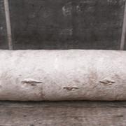 Мицелий грибов Вишенка фото
