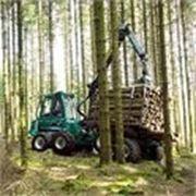 Оказываем услуги по вывозке леса по РБ фото