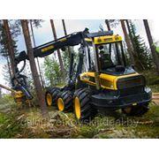 Услуги по лесозаготовке на сплошных рубках фото