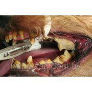 Механическое удаление зубного камня фото