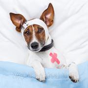 Лечение стоматитов, гингивитов у котов и собак фото