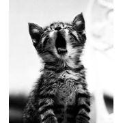 Кастрация кота Минск фото