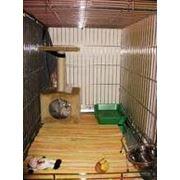 Зоогостиницы для собак и кошек фото