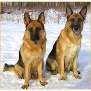 Питомник собак, Днепропетровск фото