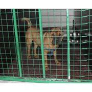 Гостиница для животных ЗооОтель Адель Ялта Крым фото