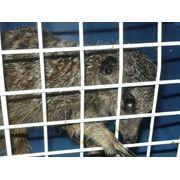 Зоогостиница гостиница для животных ЗооОтель Адель Ялта Крым фото