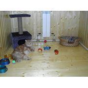 Пансион(гостиница для животных) фото