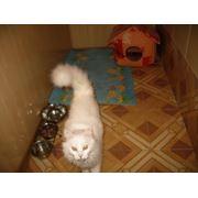 Гостиница для животных в Одессе фото