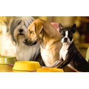 Зоогостиница для собак в Николаеве гостиница Цена Фото фото