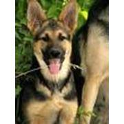 Питомники служебных собак фото